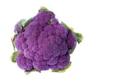 purpurowy kalafiorowe Zdjęcie Royalty Free