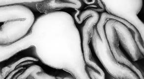 Purpurowy kapuściany makro- strzał ilustracji