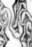 Purpurowy kapuściany makro- strzał ilustracja wektor