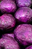 purpurowy kapuściane Obrazy Royalty Free