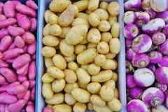Purpurowy korzeniowy warzywo obraz royalty free