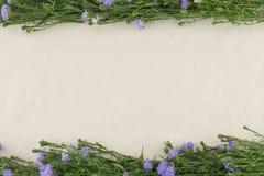 Purpurowy krajacz kwitnie na białej muślinowej tkaninie Zdjęcie Stock