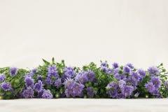 Purpurowy krajacz kwitnie od bocznego widoku Obraz Stock