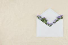Purpurowy krajacz kwitnie w białej kopercie Zdjęcia Royalty Free