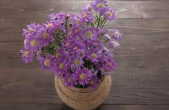 Purpurowy krajacz kwitnie w słoju na drewnianym tle, Obrazy Royalty Free