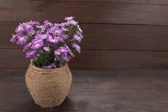 Purpurowy krajacz kwitnie w słoju na drewnianym tle, Fotografia Stock