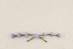 Purpurowy krajacz kwitnie wianek Obraz Royalty Free