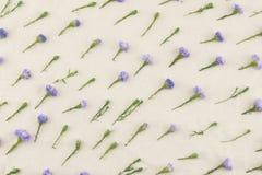 Purpurowy krajaczy kwiatów wzór Zdjęcia Royalty Free