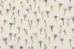Purpurowy krajaczy kwiatów wzór Obrazy Stock