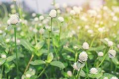 Purpurowy kula ziemska amarantu rocznika filtr obraz royalty free
