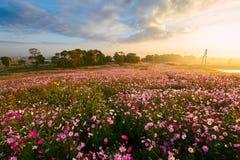Purpurowy kwiatu cloudscape i morze Obrazy Royalty Free