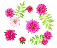 Purpurowy kwiatu pączka chryzantemy zakończenie Fotografia Stock