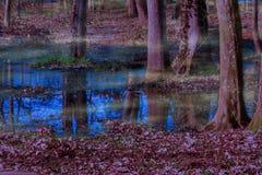 Purpurowy las w wiosna ranku mgle obrazy royalty free