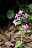 Purpurowy mały kwiat Zdjęcia Royalty Free