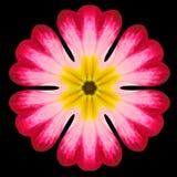 Purpurowy mandala kwiatu kalejdoskop Odizolowywający na czerni obrazy stock