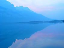 purpurowy mgiełek 2 zdjęcia royalty free