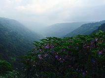 Purpurowy piękno Fotografia Stock