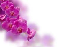 Purpurowy storczykowy kwiat zdjęcie stock