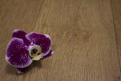 purpurowy Storczykowy kwiat na tle drzewna struktura Fotografia Royalty Free