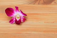 Purpurowy storczykowy piękny na drewnianej podłogowej desce z kopia tekstem i przestrzenią obraz stock