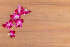 Purpurowy storczykowy piękny na drewnianej podłogowej desce z kopia tekstem i przestrzenią zdjęcie stock