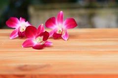 Purpurowy storczykowy piękny na drewnianej podłogowej desce z kopia tekstem i przestrzenią obraz royalty free