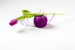Purpurowy tulipan na piłce przędza z igłami fotografia royalty free