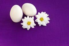 purpurowy whiteon Obraz Stock