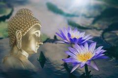 Purpurowy wodnej lelui kwiat z żółtymi Stamens w kwiacie i zamyka w górę otacza dużymi zielonymi liśćmi unosi się na wodzie Twarz fotografia stock