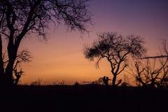 Purpurowy zmierzch wewnątrz za drzewami, Południowa Afryka Zdjęcie Royalty Free