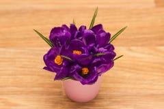 Purpurowych krokusów odgórny widok Zdjęcie Royalty Free
