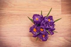 Purpurowych krokusów odgórny widok Zdjęcia Stock