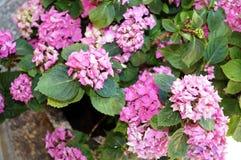 Purpurowych kwiatów zamknięty up Obrazy Stock