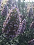 purpurrot Stockbilder