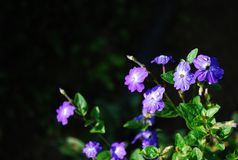 purpurrot Lizenzfreie Stockfotografie