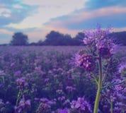 purpurrot Lizenzfreies Stockfoto