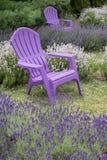 Purpurrote Adirondack-Stühle in einem Lavendel fangen #2 auf Stockfoto