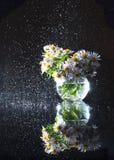 Purpurrote Astern in einem runden Glasvase mit einem Spray des Wassers Stockfotografie