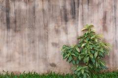 Purpurrote Betonmauer Stockfotografie