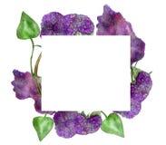 Purpurrote blühende lila Niederlassungen des botanischen Aquarellillustrationstoffes mit den grünen Blättern lokalisiert auf weiß lizenzfreie abbildung
