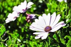 Purpurrote Blüten-Blume Stockfoto