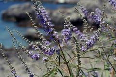 Purpurrote blaue Blumen Stockbild