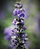 Purpurrote blaue gesunde Umwelt der schönen Blumen stockfotografie