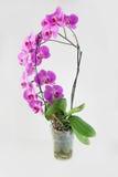 Purpurrote Blume Lizenzfreies Stockbild