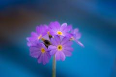 Purpurrote Blume 2 Stockfotos