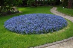 Purpurrote Blume Lizenzfreie Stockbilder