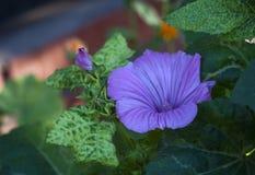Purpurrote Blume auf dem grünen Blumenblatthintergrund Stockfotografie
