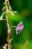 Purpurrote Blume auf einem grünen Stamm Lizenzfreie Stockfotografie