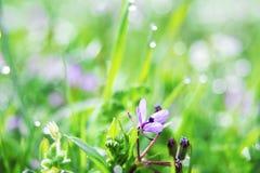 Purpurrote Blume auf grünem Gras Lizenzfreie Stockfotografie