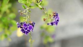 Purpurrote Blume auf seinem Baum Stockfoto